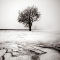 CCCXXI. ..Desolate Winter by behherit