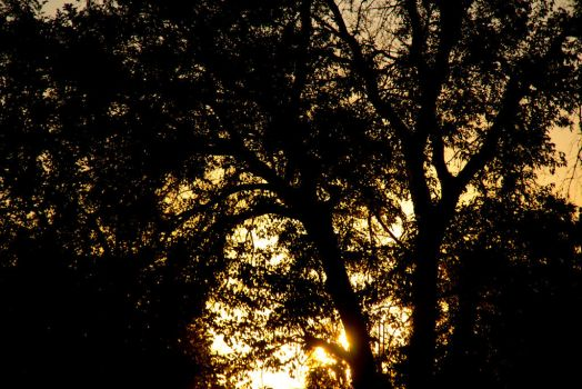 Sunset through the trees by Cyberpriest
