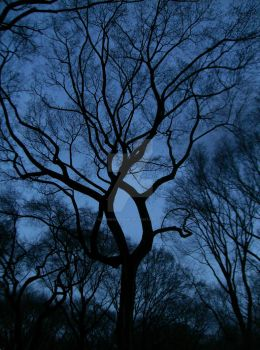 Winding Branches by hddnbhndamsk