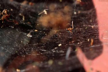 Web by WestMauE