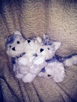 Tundra, Forest and Sylvester-Webkinz by Gerundive