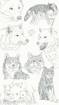 Wolves (Practice) by trazor29
