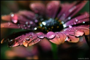 Drops in Love... by Mokarta-Photo