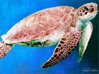 Ballpoint Pen Drawing of a Sea Turtle by TheKrystleGallery