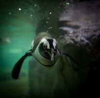 Ernie the Penguin by nprkr