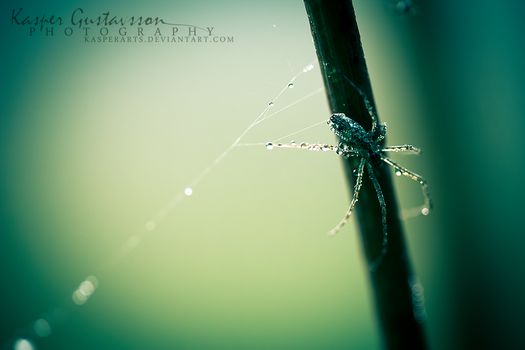Nothing But Pearls by KasperGustavsson