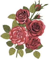 Vector bouquet of red roses by 8LouLou8