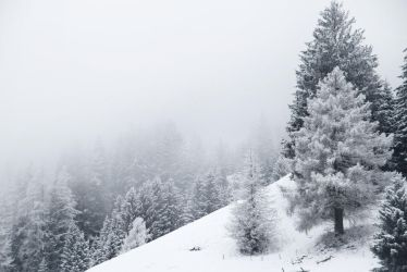 winter mist by ssilence