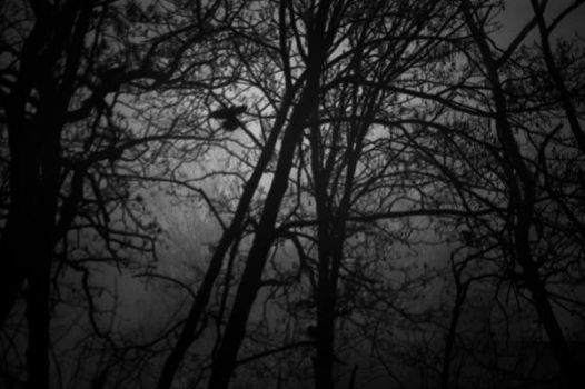My thoughts are creeping ,, by lesna