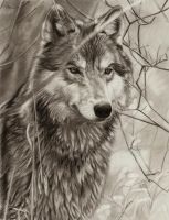 Awaiting Wolf by AmBr0