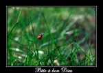 Petite coccinelle by marcp