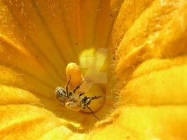 Busy Bee by Danette