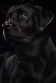 Doggy Study 1 Day #64 by AngelGanev