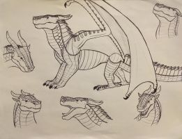 Wings of Fire: Mudwing studies by Iron-Zing