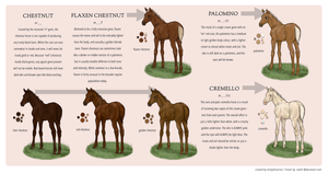 Equine Colour Guide :: Chestnut by MistyofSunrise