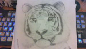 Unfinished Drawing! Life art work of tiger! by rwmtiger