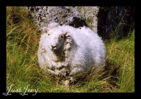 Wales: Puffball by just-joey