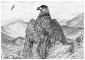 Eagle of the Highlands by PhilipHarvey