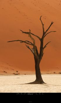 Deadvlei by Crooty