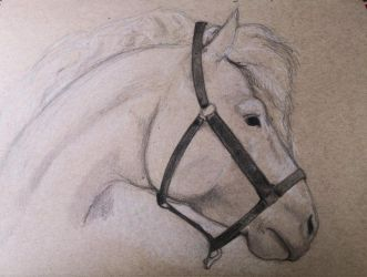 Horse sketch by saemful