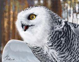 Snowy owl by jakhont