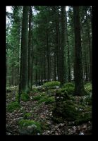 Winter forest by smeghead1976