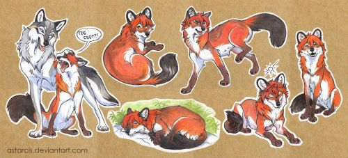 Trade: A Dhole and A Wolf by Astarcis