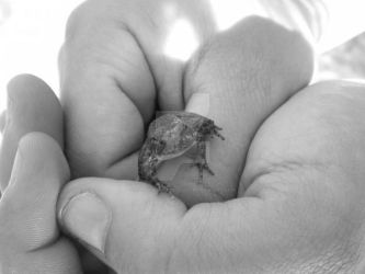 Froggy in Charlotte's Hands by LittleMissMeticulous