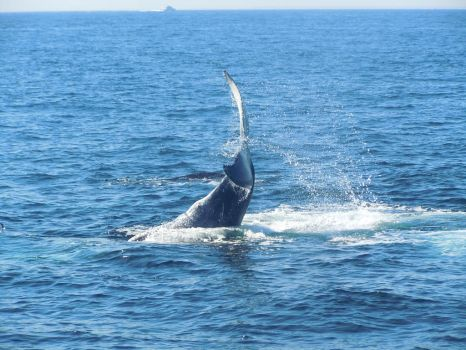 Baby Whale Showing Off by FreeingMyAngelWings