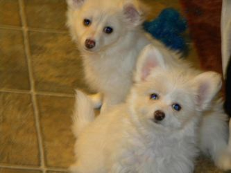 my puppies by summer31