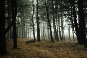Magical forest 131 by MASYON