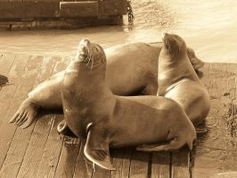 Sun Soaked Seals by shutterbabe2006