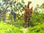 Tiger in the grass by Darth-Marlan