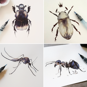 Insects by megounette