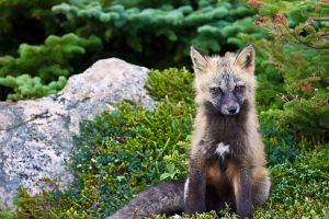 You Bore Me - Baby Fox by Witch-Dr-Tim