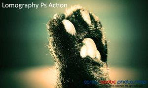 Lomography Ps Action by canalphotoshop