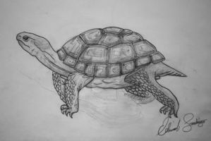 Tarapin Turtle by Dragonis0
