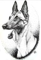 Malinois sketch by excaite