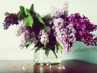 Pourpre lilas by catheea