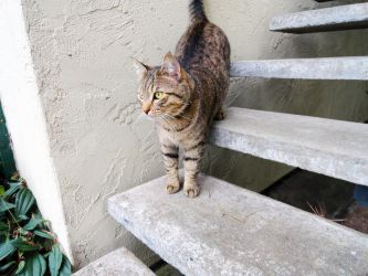 Stairs and Cat by MandyMcPebbleFace