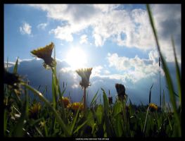 Dandelions Before The Storm by pitchblacknight