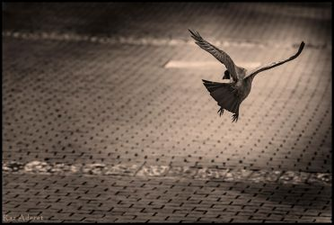 Jump High by Aderet