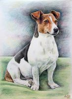 Jack Russell Terrier Sally by ArtsandDogs