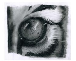 Tiger eye by AndyBuck