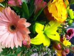 Flowers in Color by AthenaIce