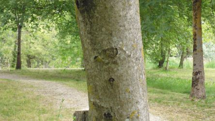 Trees have eyes by nicolapin