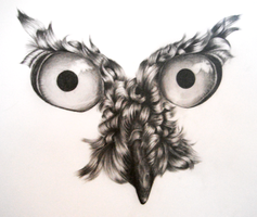 Owl Drawing WIP (Stage 1) by icee-bleu