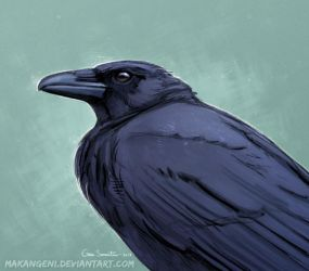 Carrion Crow by makangeni