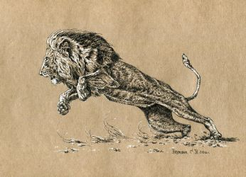 don't anger the lion by Animal75Artist
