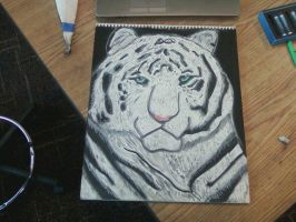 White Tiger by Konack1